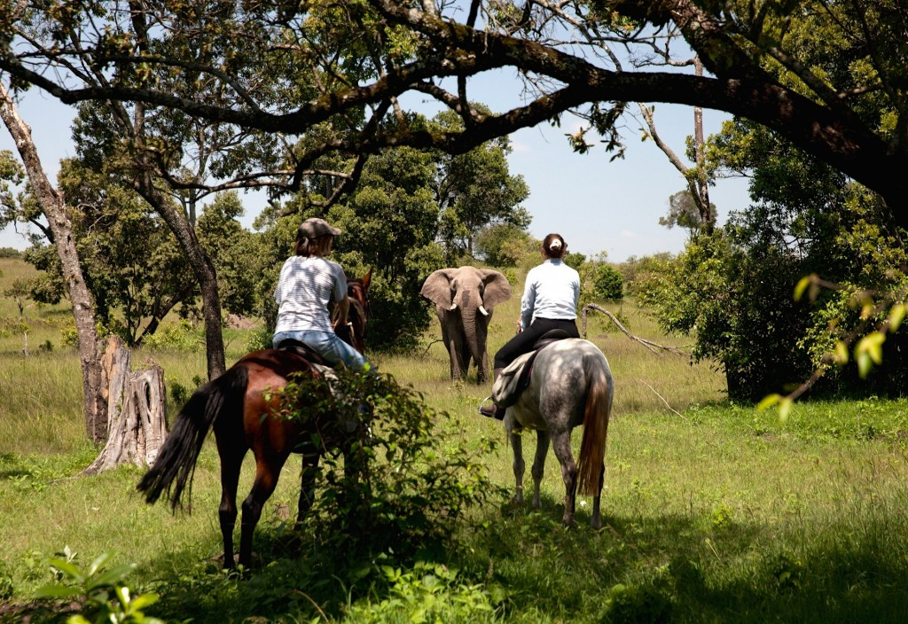 Get up close to wildlife, Offbeat Safaris, Kenya