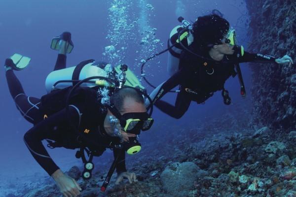 pole pole mafia island zanzibar diving