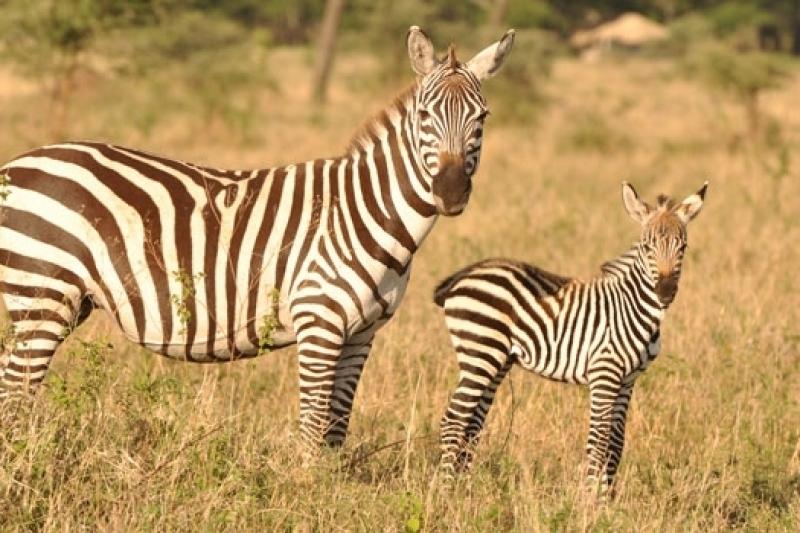 Off Season Tanzania