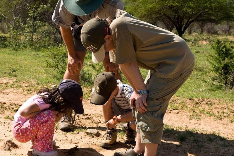 Ant's Nest Kid's Walk