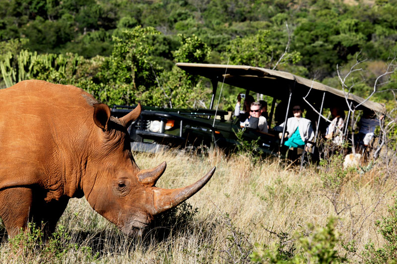 game drives in south africa