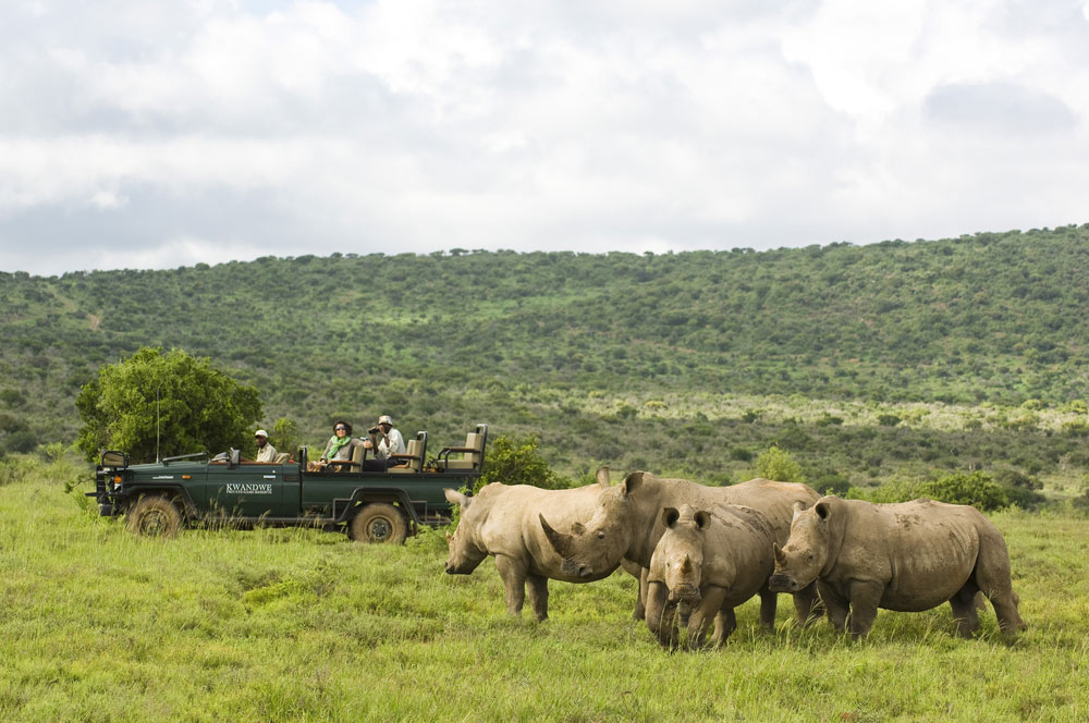 kwandwe Rhino Watching in Jeep