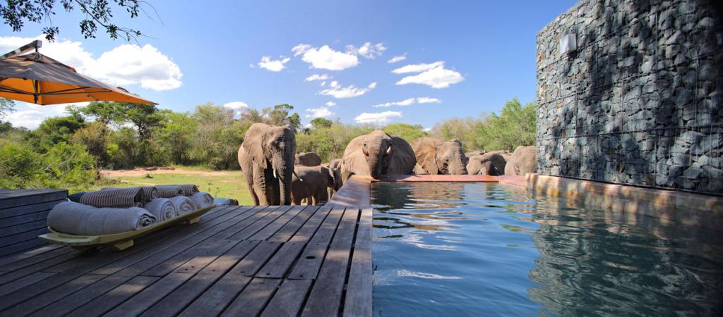 phinda homestead elephants