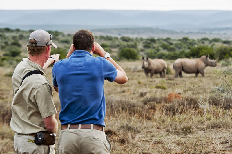 Kwandwe Rhino Watching