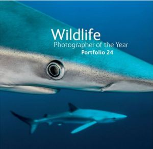 Wildlife Photographer of the Year - Portfolio 24 two sharks underwater