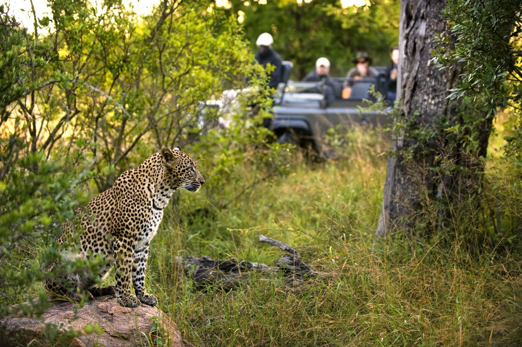 Fabulous wildlife in the Kruger, lion sands luxury safaris