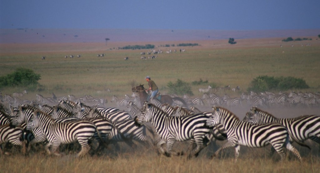 Riding horses with zebras, Masai Mara, Kenya. Image credit Offbeat Safaris