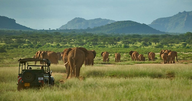 Elephant herd as viewed from a game drive