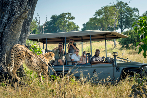 Family watching at Cheetah at Little Vumbura, Okavango Delta, Botswana