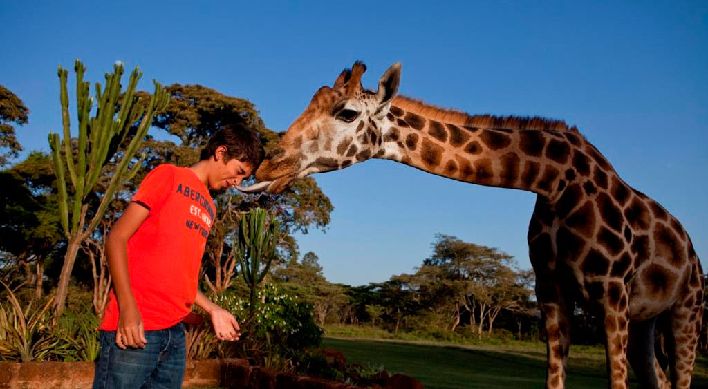 teenage boy being licked by a giraffe on his face