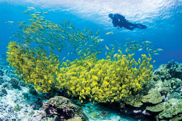 Colourful fish and coral in the Seychelles, Alphonse Island