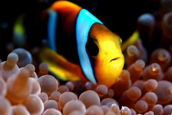 Colourful fish, Thonga Beach Lodge