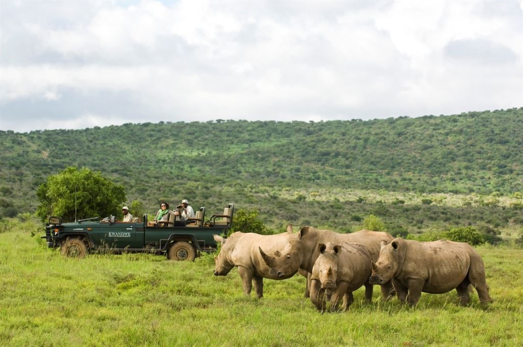 A crash of rhino on a Kwandwe game drive