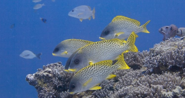 Best African dive sites - reef fish and coral