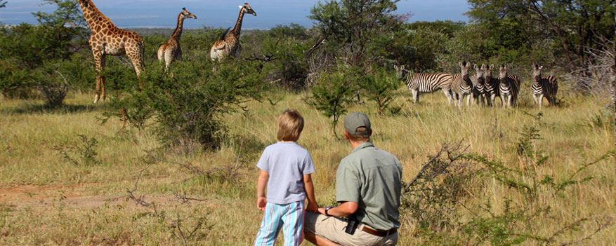 guide with child watching giraffe and zebra herds