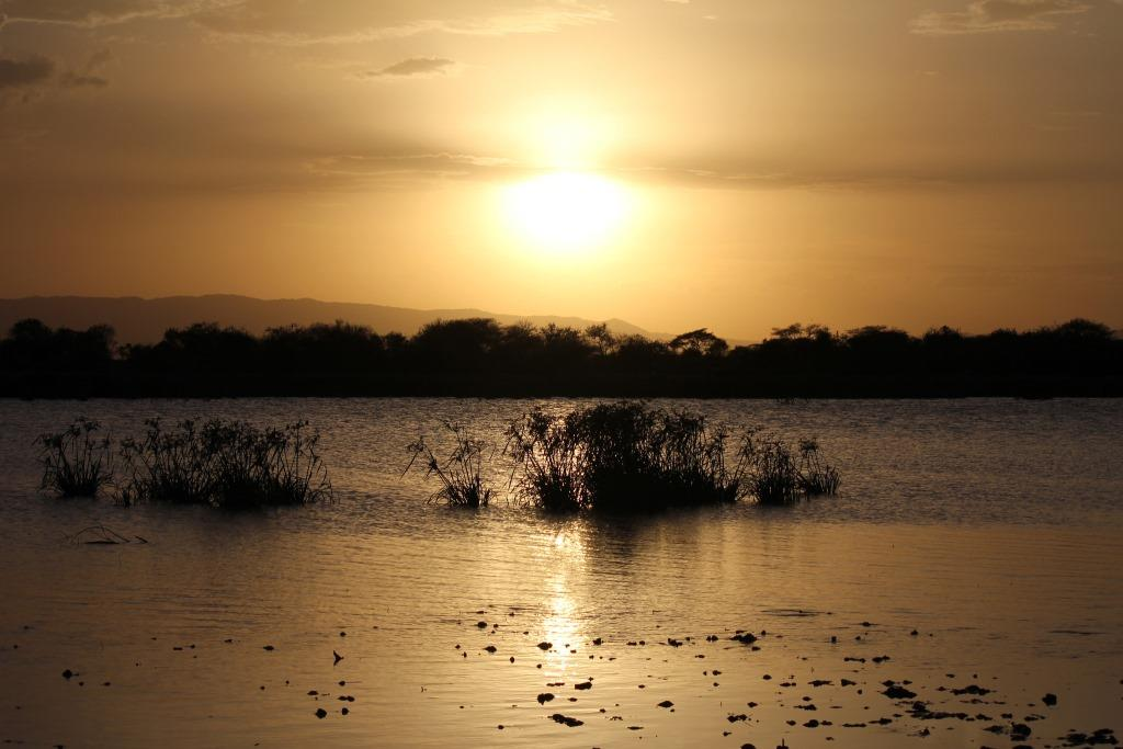 Lake Manyara captured at sunset with clumps of reeds in the mid field