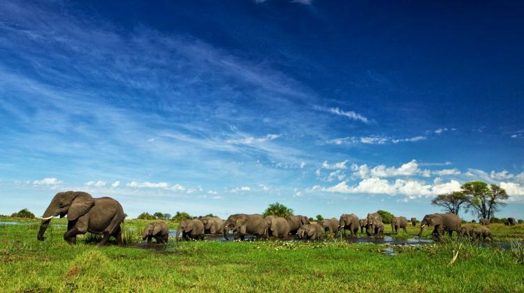 Aardvark Safaris welcomes members of Foxhills Resort