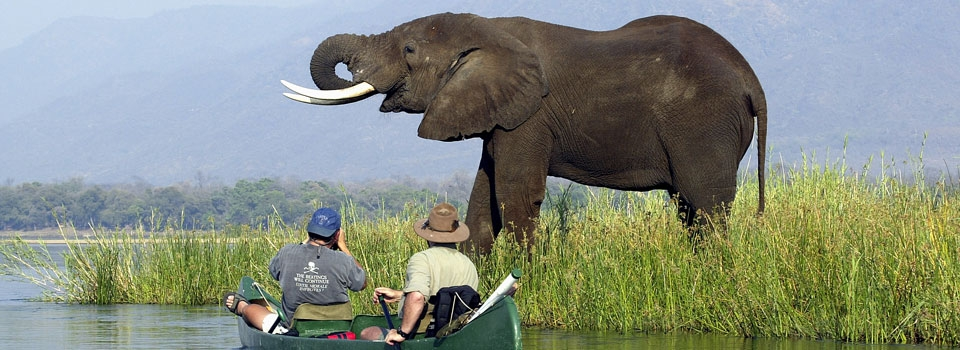 elephant and canoists at Mana pools