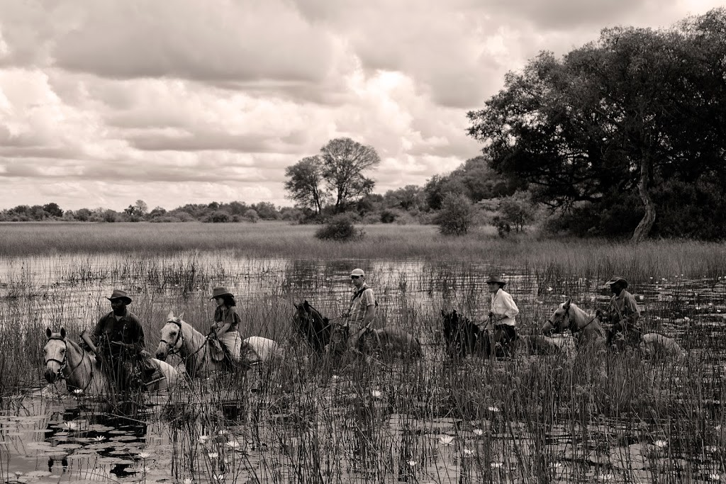 black and white photo of 5 riders wading through the lily reeds