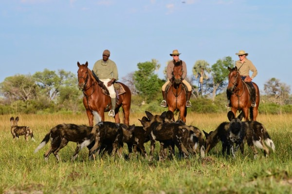 African Horseback Safaris (2) three riders with wild dog 600 400