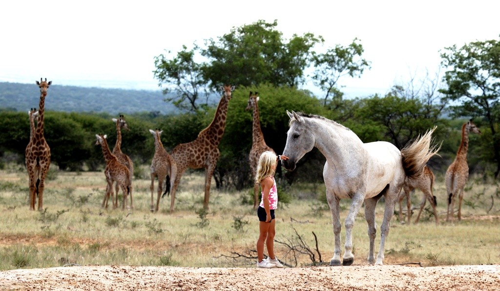 Girl with a grey horse and giraffe, family riding holidays at Ants Hill and Ants Nest, Waterberg, South Africa