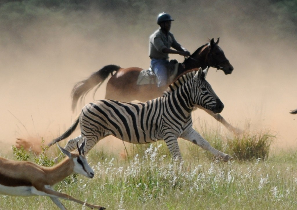 Rider galloping alongside a zebra, and oryx, Horizon Horseback Adventures, South Africa