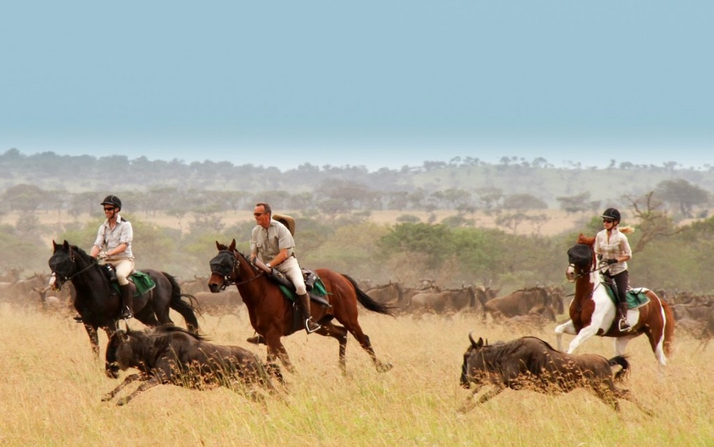 Three riders galloping alongside the wildebeest migration Singita Grumeti, Tanzania