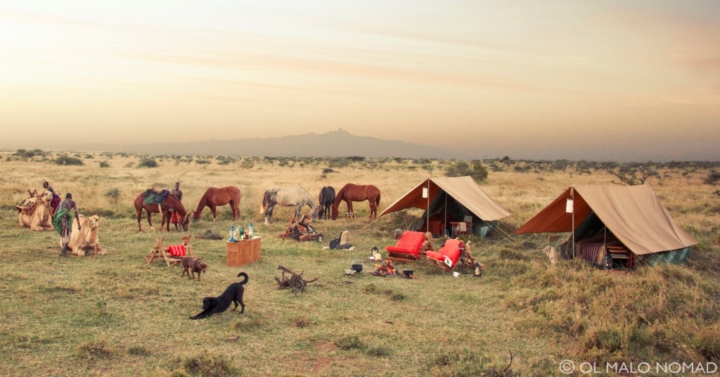 Horses and camels relaxing with dogs at camp, with guides, Ol Malo, Kenya