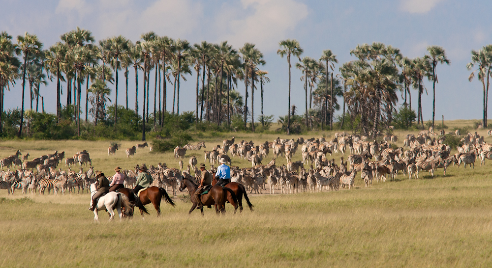 Riding with the zebra migration, Makgadikgadi pans, Botswana