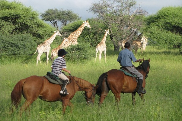 Ride and Walk Botswana (2) child and guide walking besides herd of giraffe 600 400
