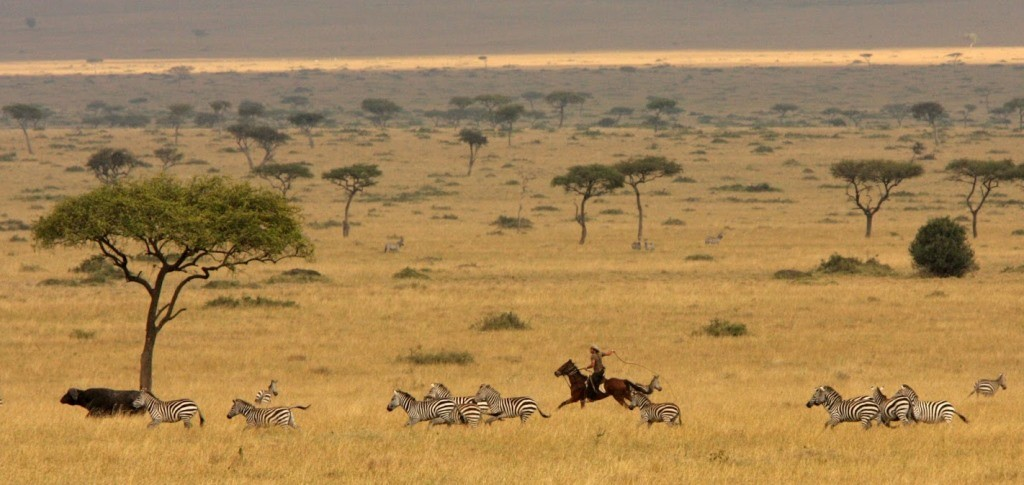 Offbeat Safaris, Kenya rider chasing wildebeest and zebra