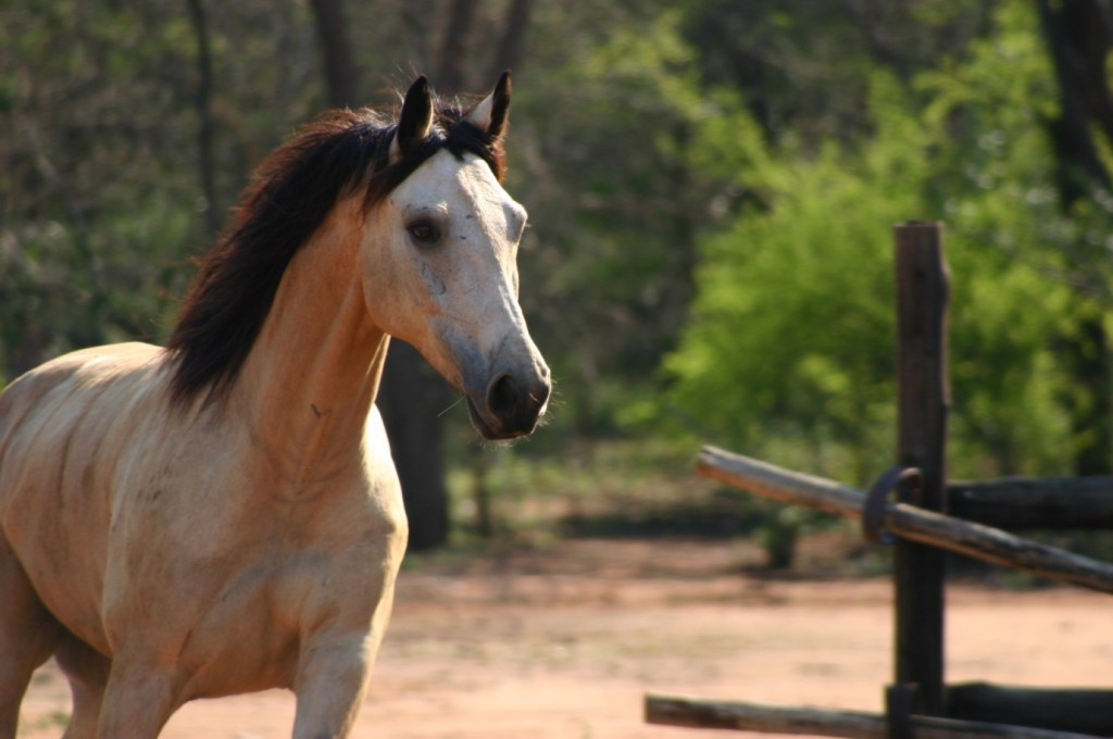 Tsingtao - Wait a Little Waterburg South Africa