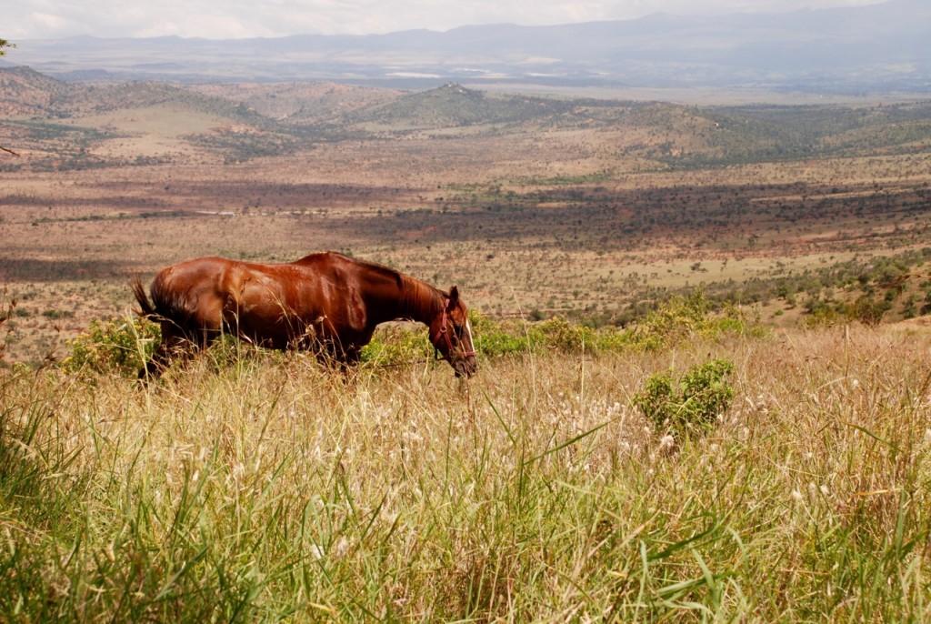 Whisky, Borana, Kenya