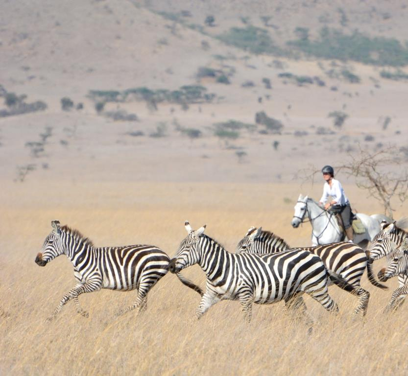 Zulu, riding behind zebra, Ol Donyo, Kenya