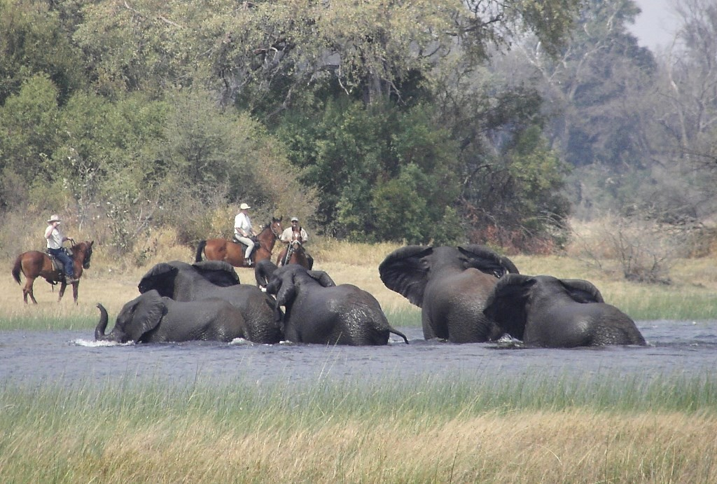 Elephants frolicking, riders in the background, Okavango Horse Safaris, Botswana