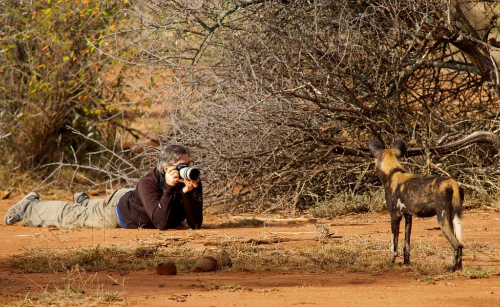 Wild Dog and Cameraman - Laikipia Wilderness Camp Laikipia Kenya
