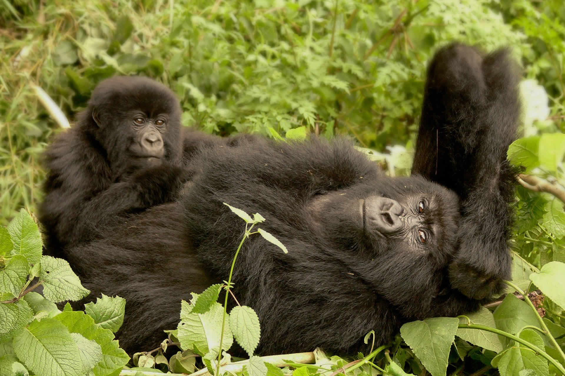 Primate Safaris tried and tested