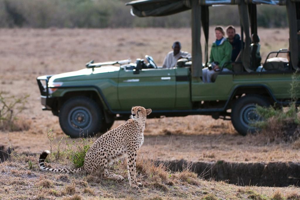 Wildlife viewing at Mara Plains Camp, Kenya. Image credit: Great Plains Conservation