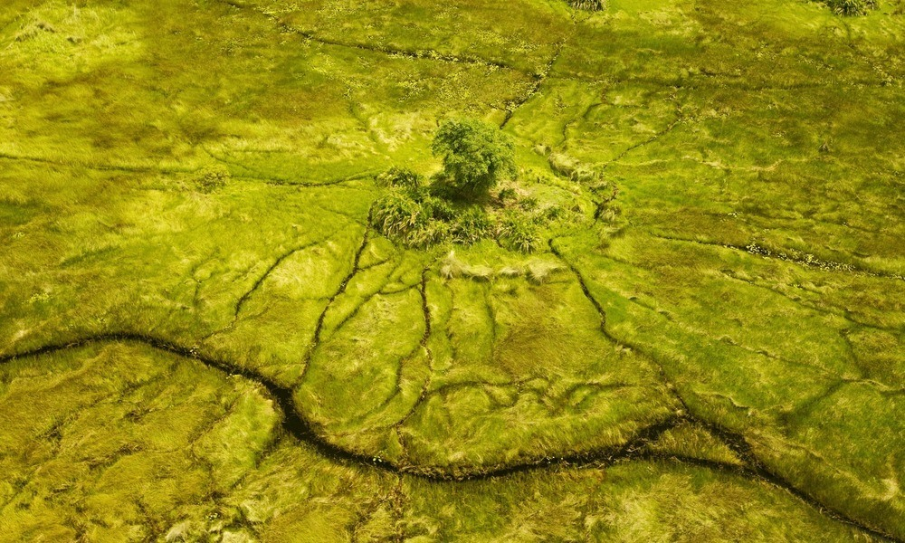The spider pattern of the Okavango Delta. Image credit; Beverly Joubert for Great Plains Conservation