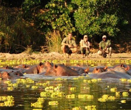 Low season safari in Zambia