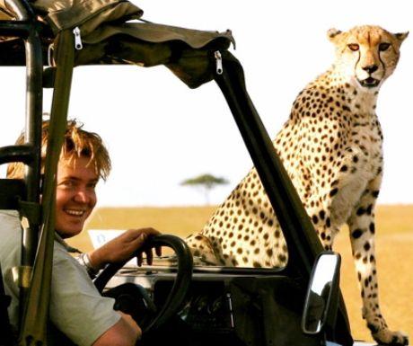 Close Up Cheetah Viewing in Masai Mara