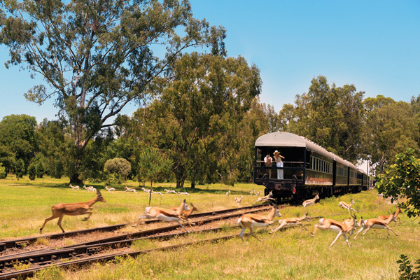 Rovos Rail observation car with antelope on tracks, luxury train