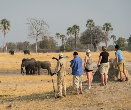 Walking safari with Wilderness Safaris