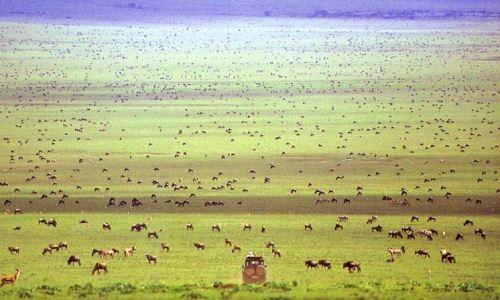 Serengeti Landscape wildebeest migration