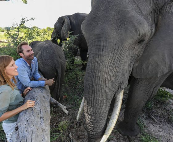 Elephant safaris