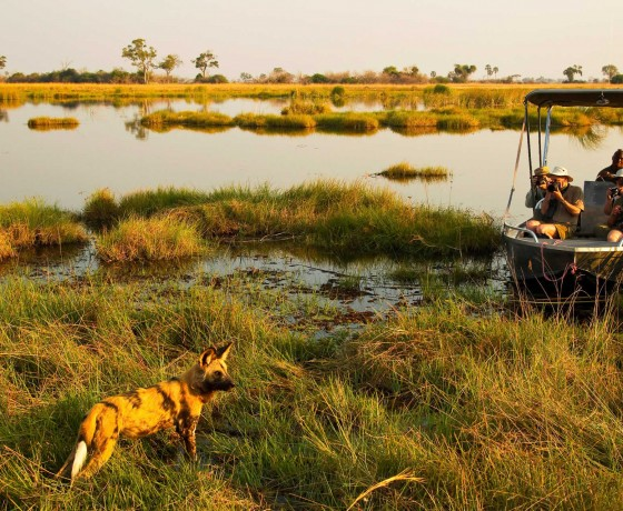 Great waterways: Chobe & Linyanti