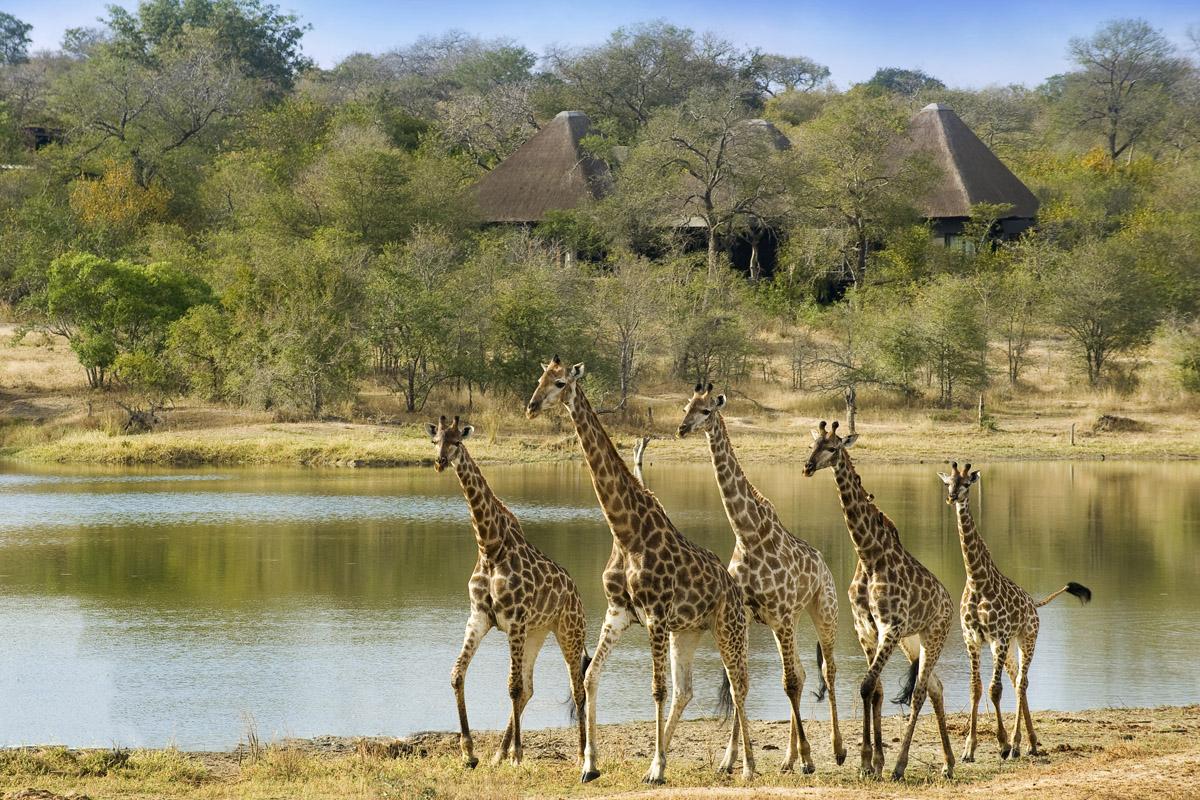 Chitwa-Chitwa-Giraffe