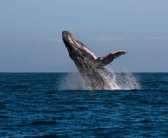 Whales and beaches Ile Sainte Marie