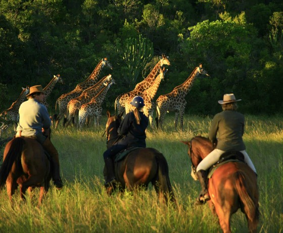 Riding safaris