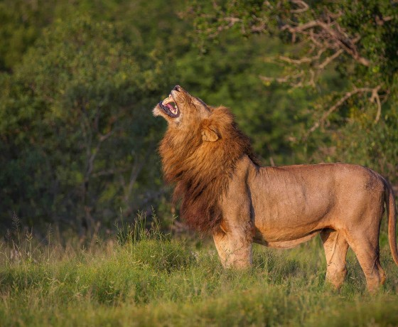 The Kruger's exceptional wildlife